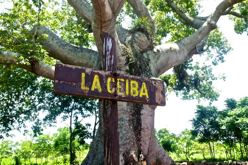Kuba-Baum lizenzfreies stockbild