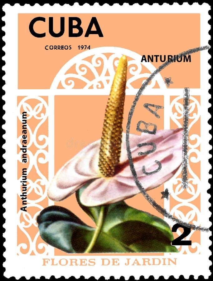 KUBA - CIRCA 1974: Portostämpeln som skrivs ut i Kuba, visar blommaAnthuriumandraeanumen, serieblommor royaltyfri foto