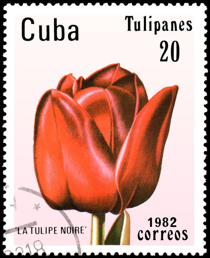 KUBA - CIRCA 1982: portostämpeln som skrivs ut i Kuba, visar en röd för Tulipe för tulpan`-La ` noire, royaltyfria bilder