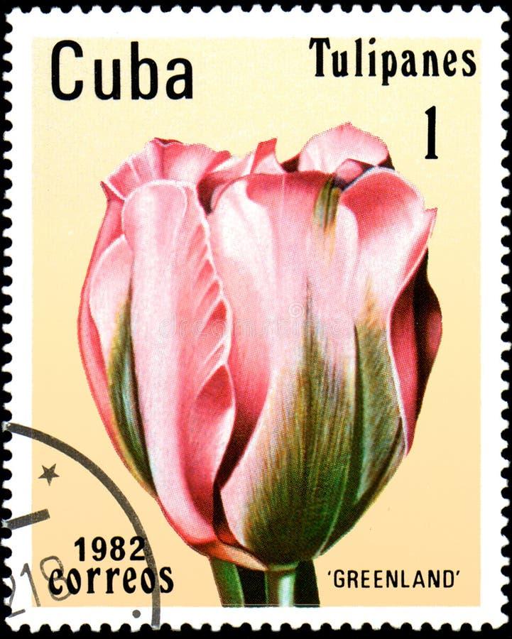 KUBA - CIRCA 1982: portostämpeln som skrivs ut i Kuba, visar en rosa tulpan royaltyfri foto
