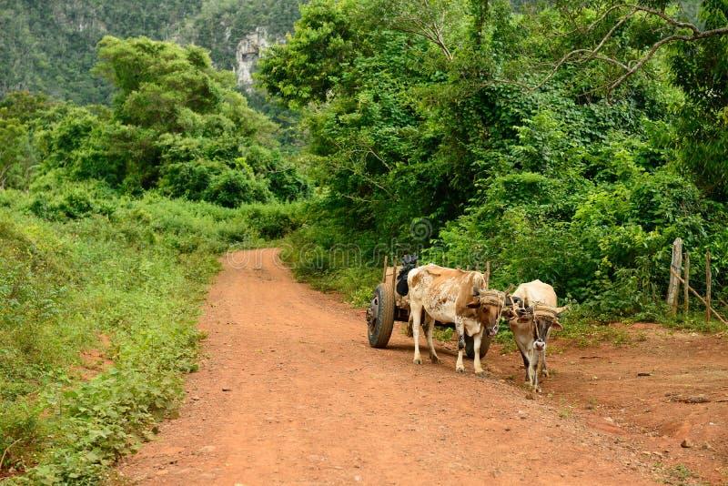 Kuba, Dolina De Vinales zdjęcie stock