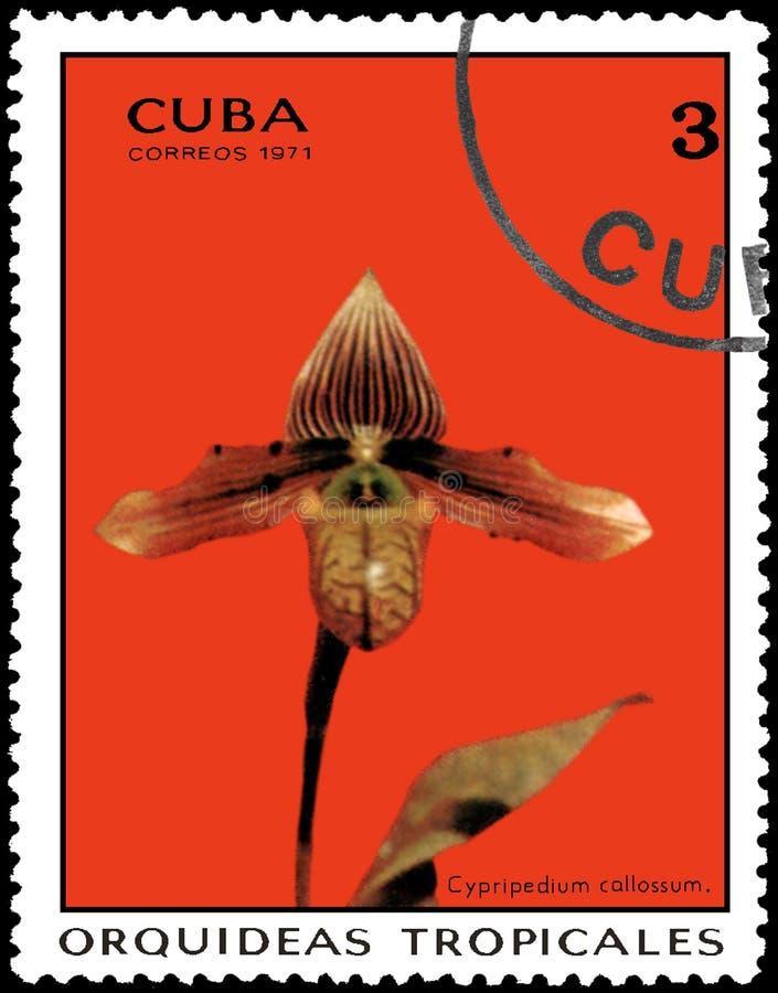 KUBA - OKOŁO 1971: Znaczek pocztowy drukujący w Kuba pokazuje storczykowego Cypripedium callossum, serii orchidee fotografia royalty free