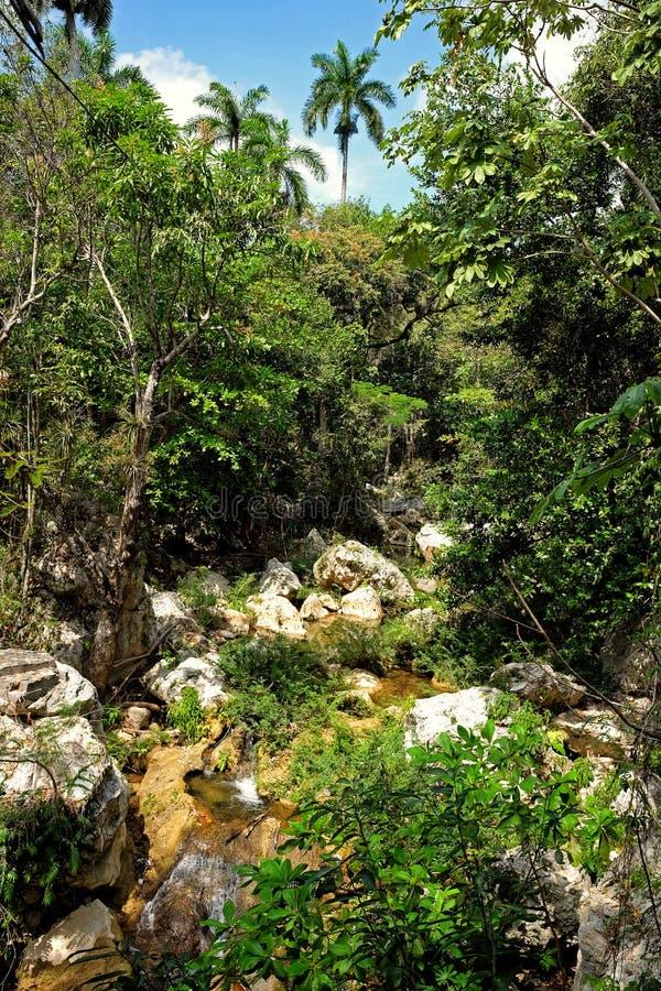 Kubansk naturlig skog royaltyfria bilder