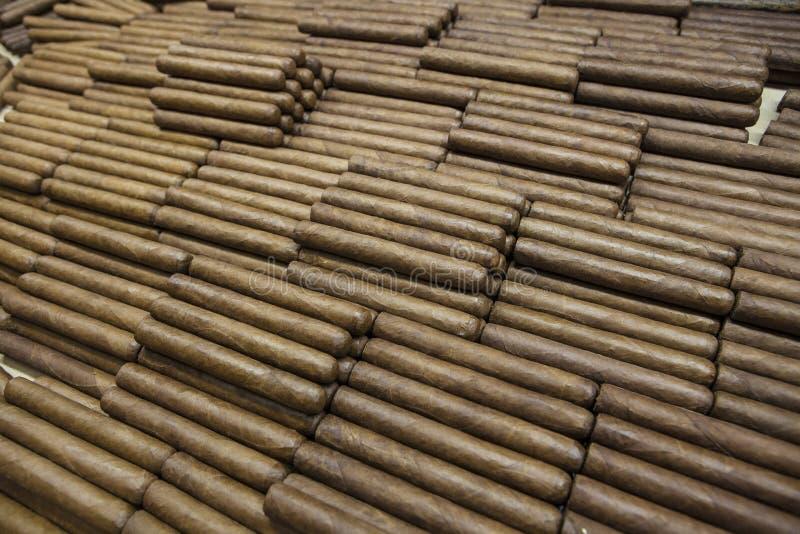 Kubansk rullande cigarrhand royaltyfri bild