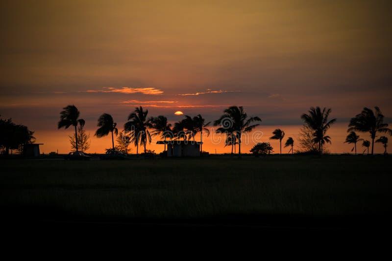 Kubansk solnedgång i havannacigarr med palmträd och kojan arkivbild