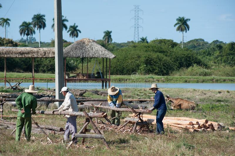 Kubanska män som hugger av journaler arkivbild