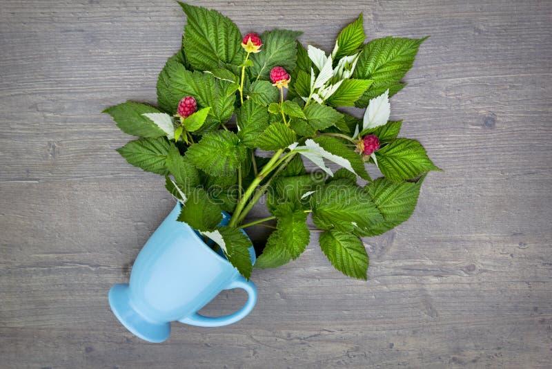 Kubek gorąca herbata z malinkami na drewnianym stole, filiżanka gojenie napój dla zimna zdjęcia stock