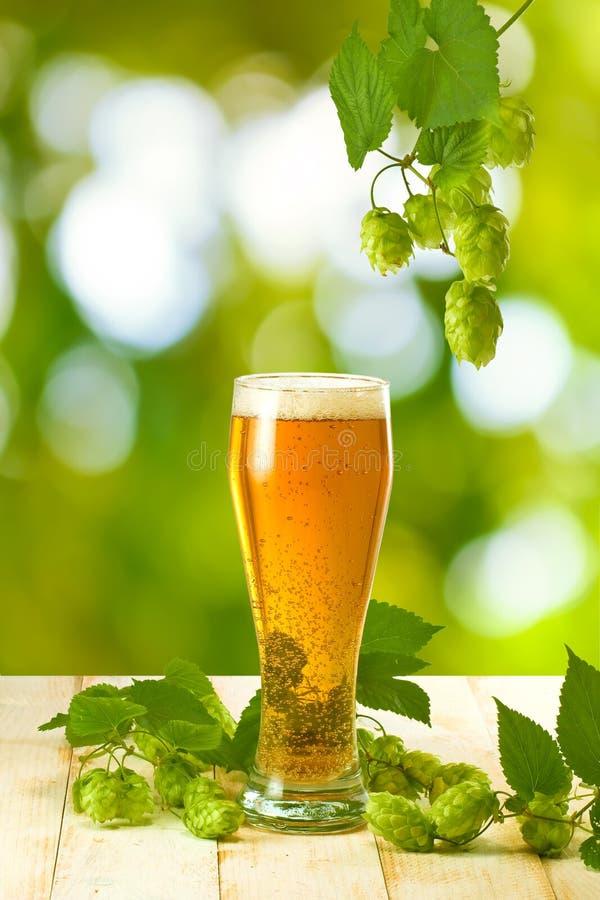 Kubki z piwem i chmielem na drewnianym stole na zielonym tle fotografia royalty free