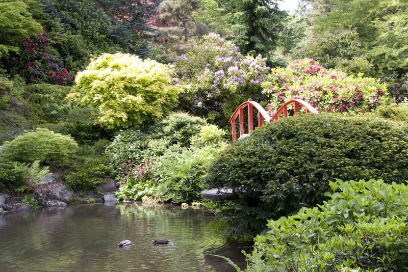 Kubota japanträdgård royaltyfri bild