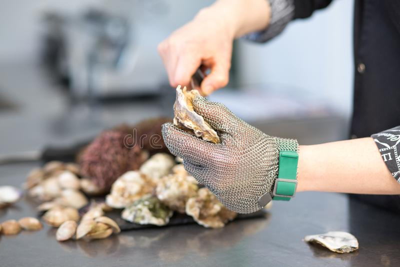 Kucharz ciie ostrygową molus skorupę w restauracyjnej kuchni Zbliżenie ręka z nożem w metalu łańcuchu rękawiczce Na metalu obraz royalty free