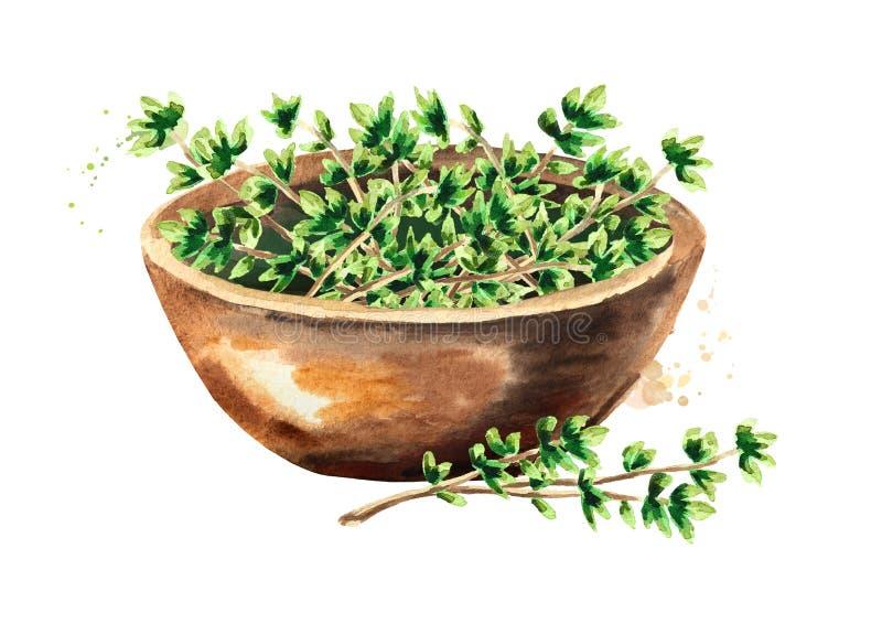 Kuchenna zielarska macierzanka Puchar z zielonymi liśćmi Wręcza patroszoną akwareli ilustrację odizolowywającą na białym tle ilustracja wektor