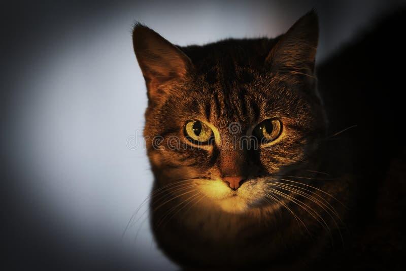 Kuchnia z kamerą portret kota zdjęcia royalty free