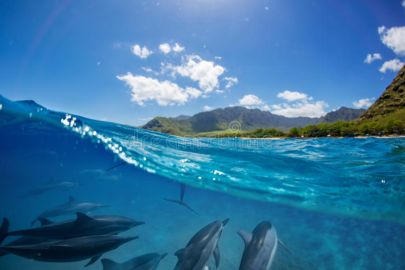 Kudde van dolfijnen onderwater met landschap over waterlijn stock afbeeldingen