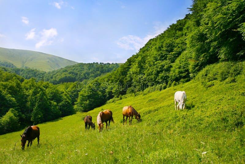 Kudde van paarden stock afbeeldingen