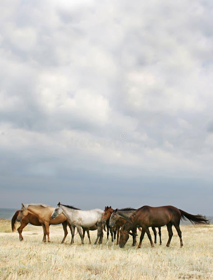 Kudde van paarden stock foto