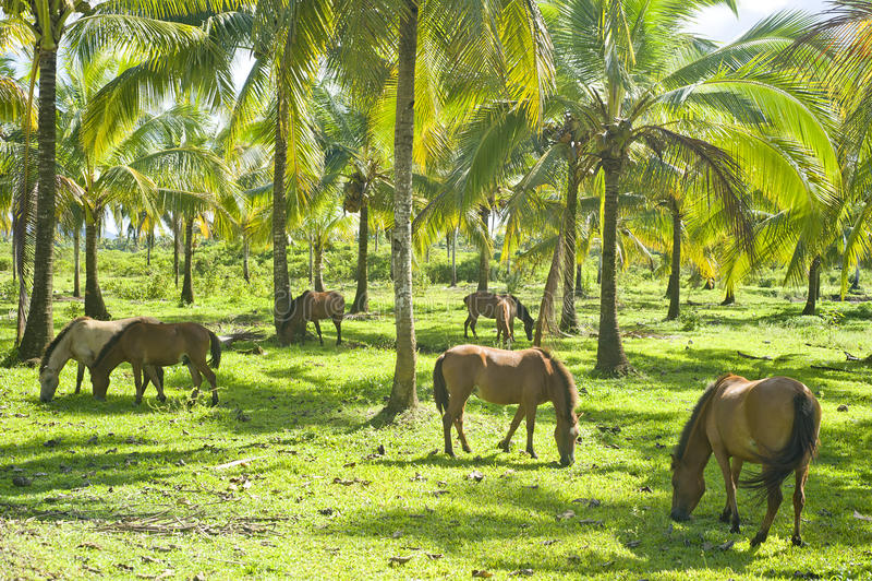 Kudde van paarden stock foto's