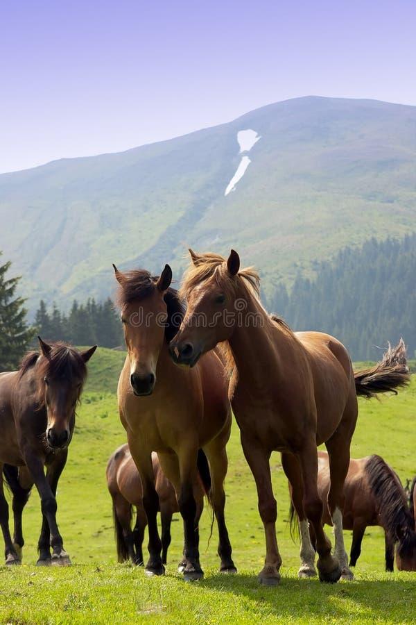 Kudde van paarden royalty-vrije stock foto