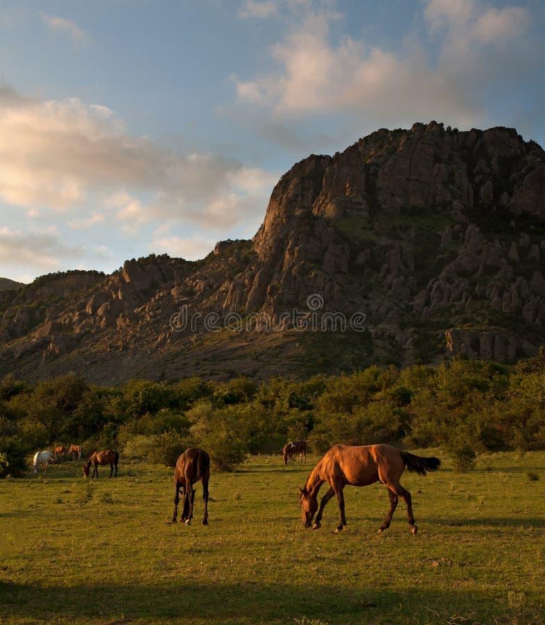Kudde van paarden bij zonsondergang op een achtergrond van bergen stock afbeeldingen