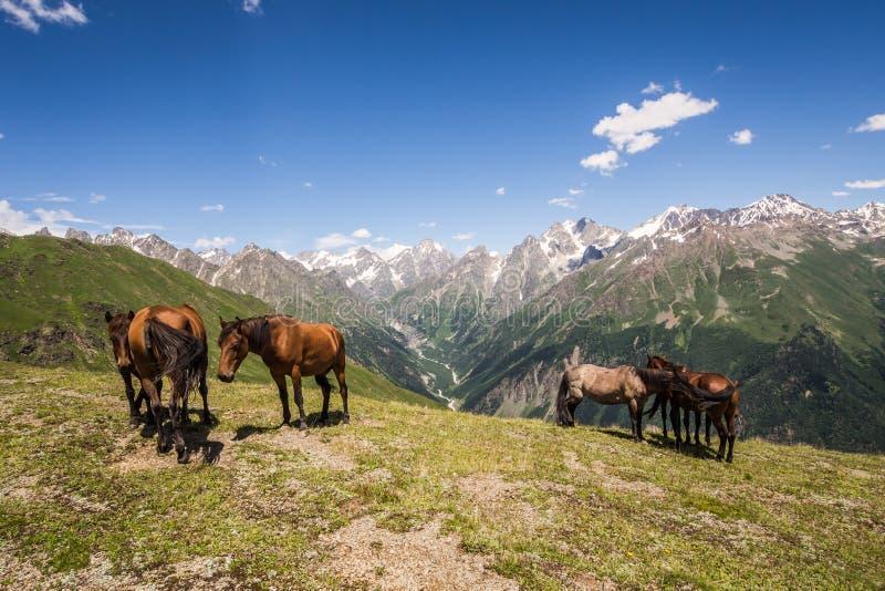 Kudde van paarden in de bergen stock foto's
