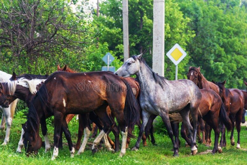 Kudde van paarden die in de lente weiden royalty-vrije stock fotografie