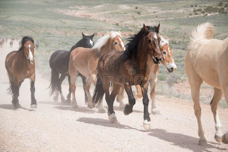 Kudde van paarden die langs stoffige weg lopen royalty-vrije stock foto