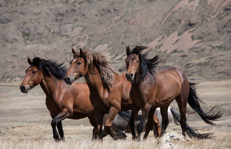 Kudde van paarden op een achtergrond van bergen stock afbeeldingen