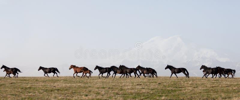 Kudde van paarden op een de zomerweiland stock fotografie