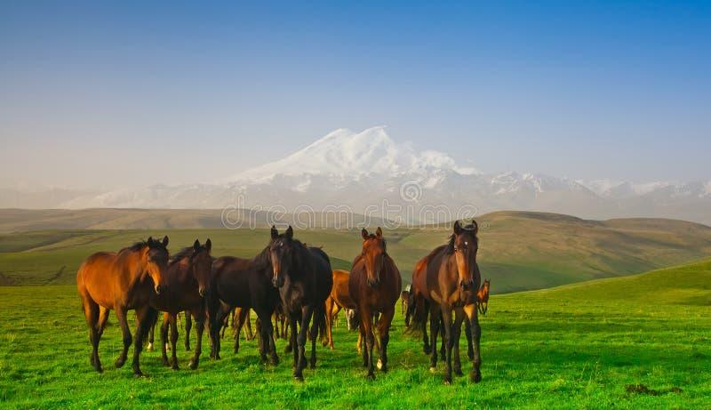 Kudde van paarden op een weiland in bergen royalty-vrije stock foto