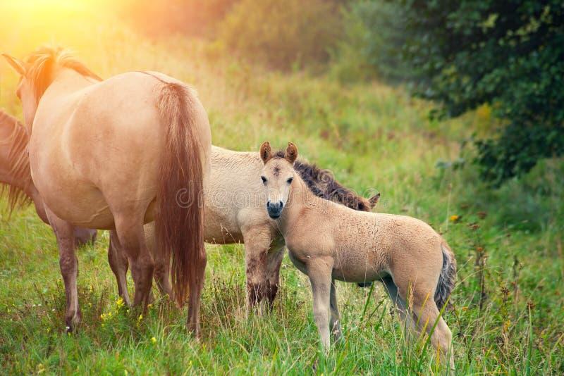 Kudde van wild paarden stock foto's