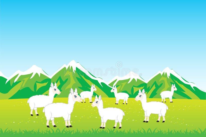 Kuddeschapen op gebied royalty-vrije illustratie