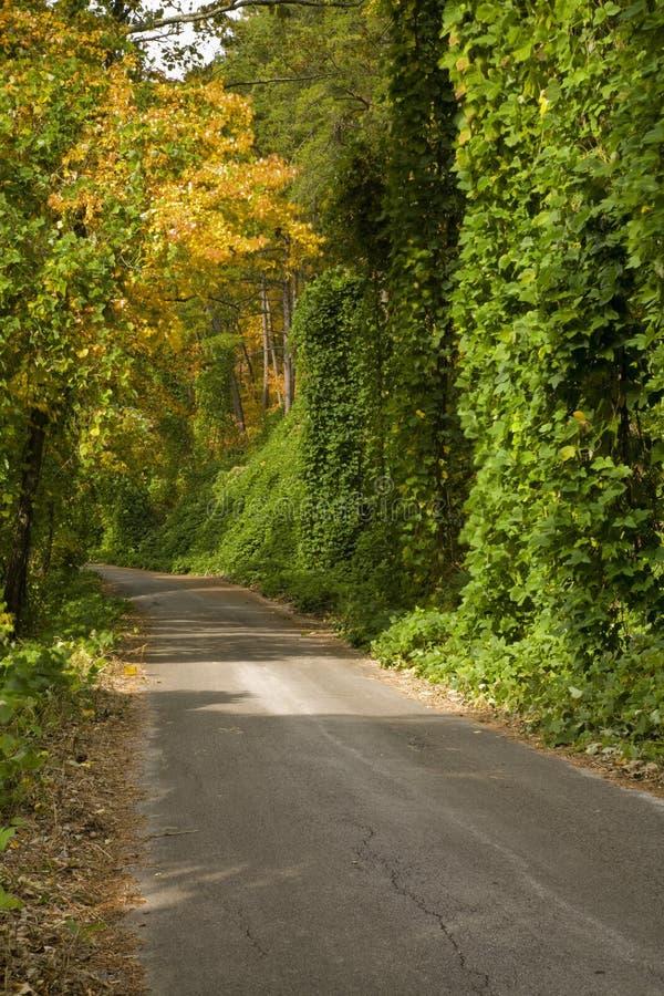 Kudzu, autunno, N-F cherokee immagine stock libera da diritti
