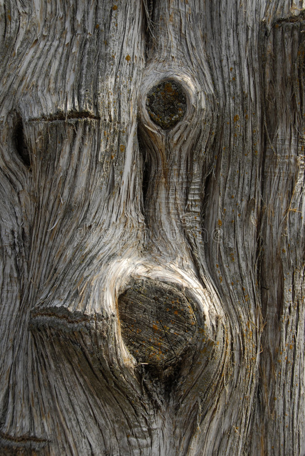 kufer drzewny obraz royalty free