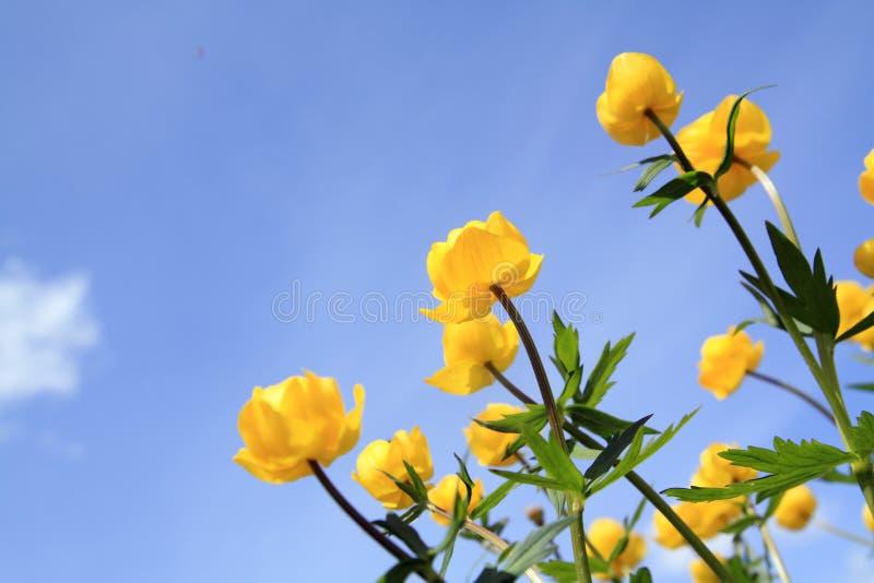 Kugel-Blume lizenzfreie stockfotografie