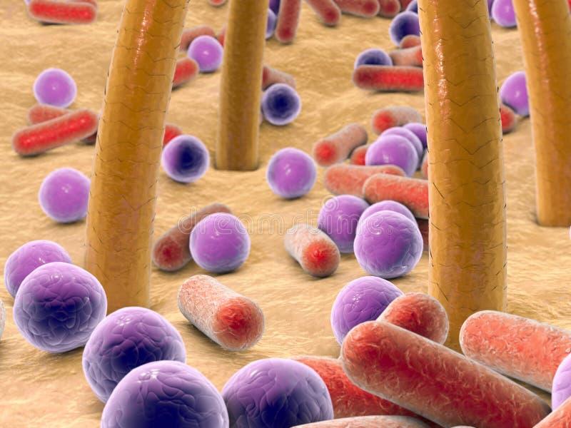 Kugelförmige und Stange-förmige Bakterien auf Haut mit den Haaren stock abbildung