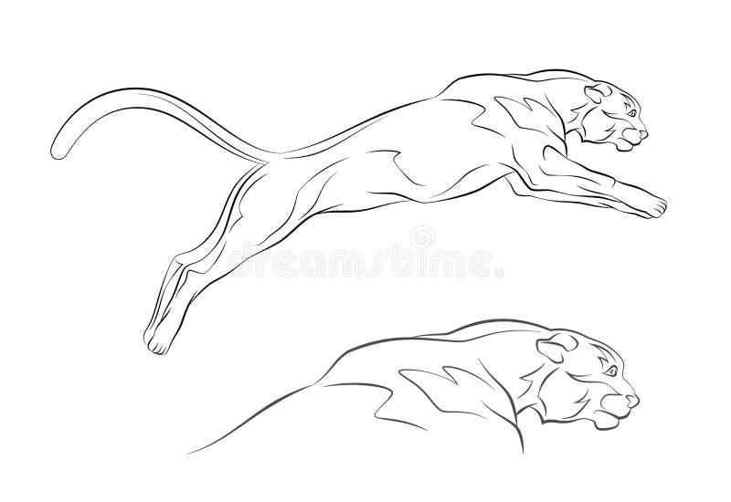 Kuguar royalty ilustracja