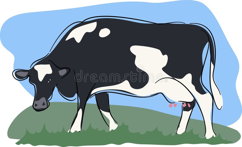 Kuh stock abbildung