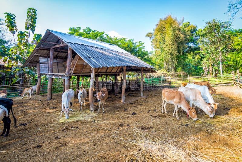 Kuh im Hürdenzaunholz lizenzfreies stockbild