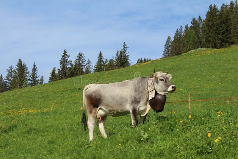 Kuh mit schöner traditioneller Glocke lizenzfreies stockfoto