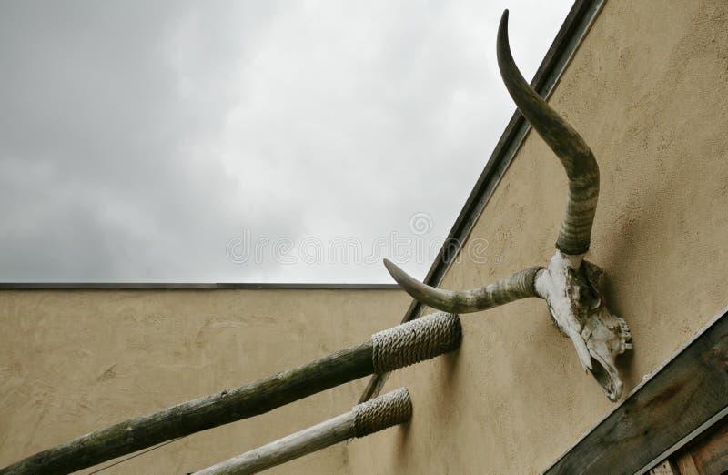 Kuh-Schädel und Himmel stockfoto