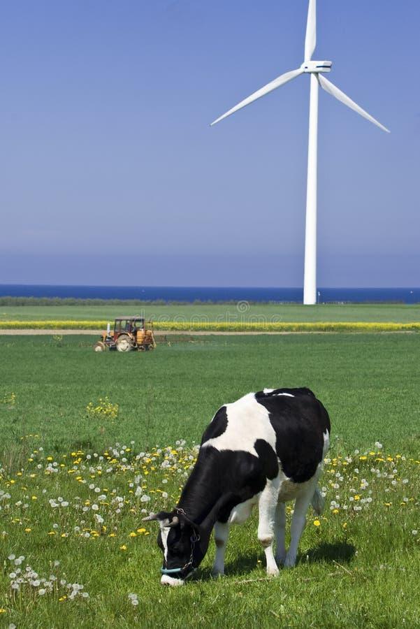 Kuh- und Windturbine lizenzfreie stockbilder