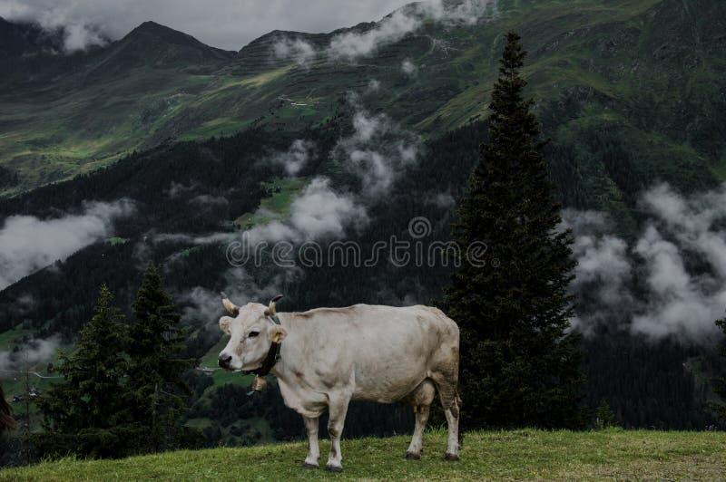 Kuhwolken und -nebel auf die Oberseite des Berges stockfotografie