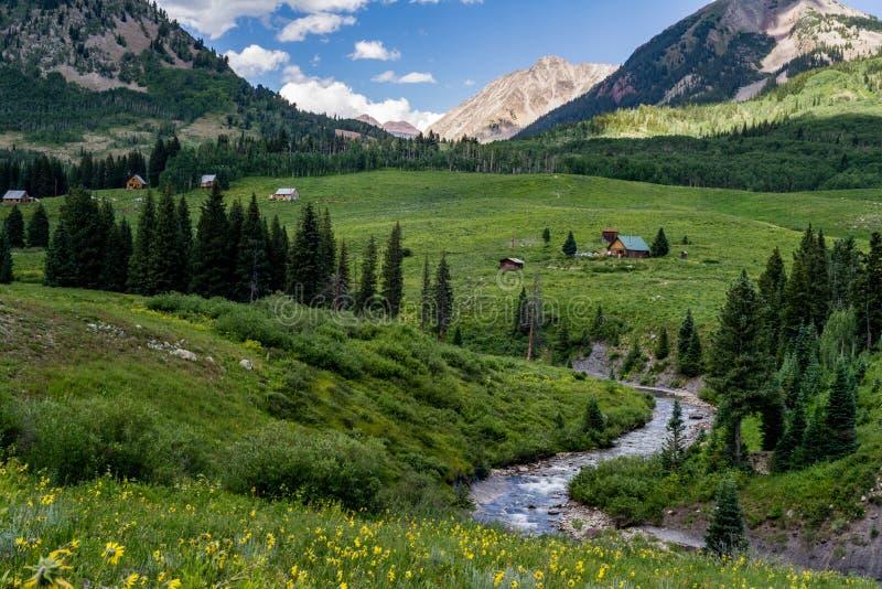 Kuifbutte de berglandschap en wildflowers van Colorado stock foto's