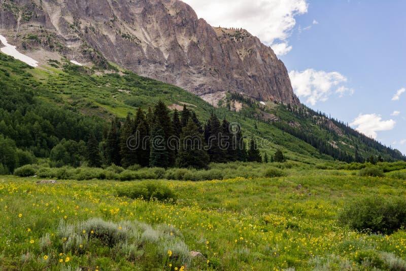 Kuifbutte de berglandschap en wildflowers van Colorado stock fotografie