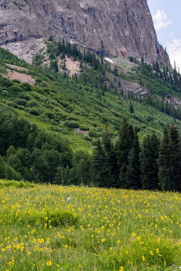 Kuifbutte de berglandschap en wildflowers van Colorado royalty-vrije stock afbeelding