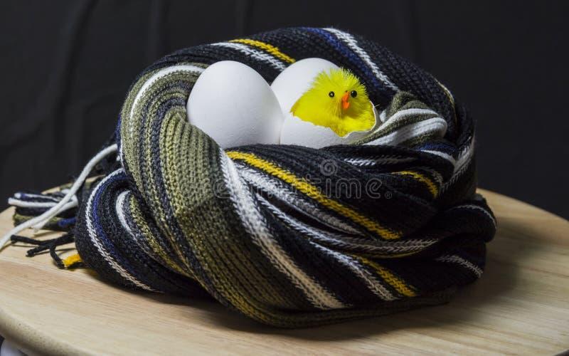 Kuiken van een ei wordt uitgebroed dat In het nest van een sjaal Drie eieren stock fotografie