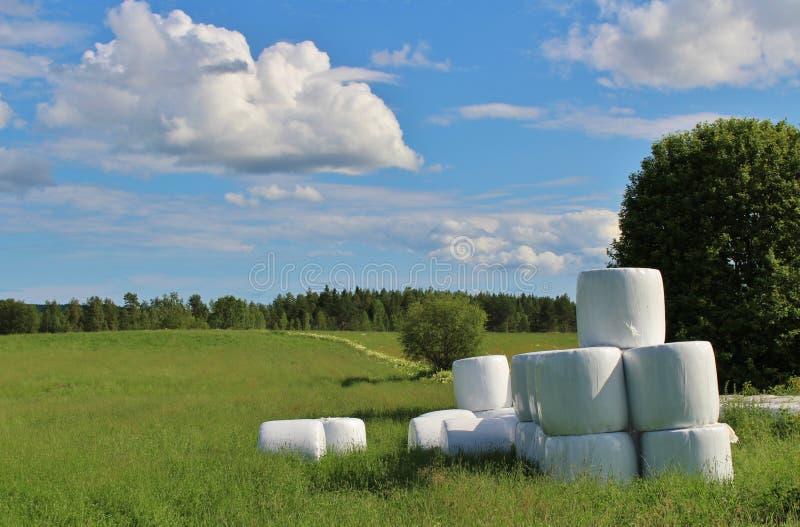 Kuilvoederbalen in mooi de zomerlandschap royalty-vrije stock afbeeldingen