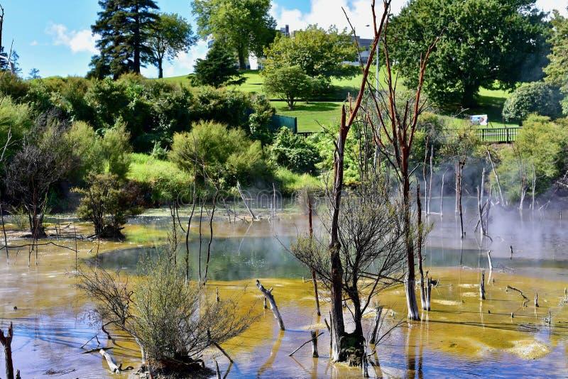 Kuiraupark, Rotorua stock afbeeldingen