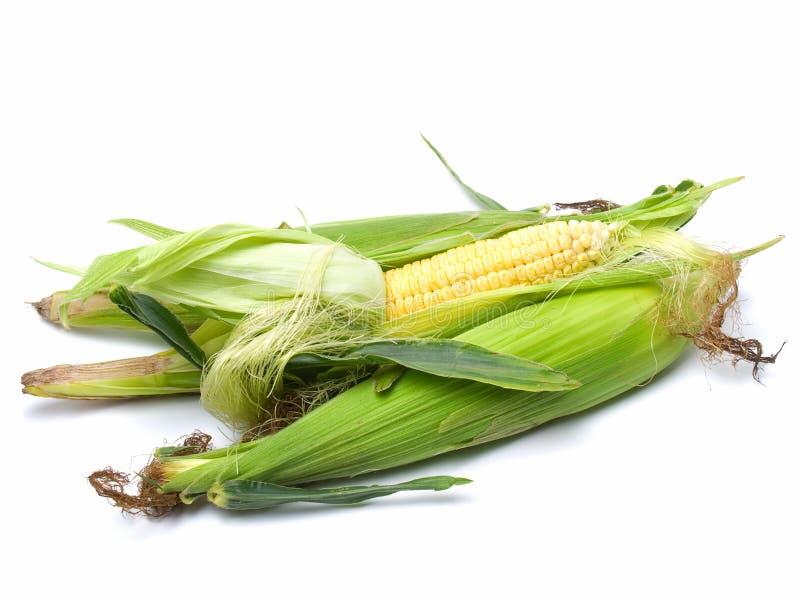 kukurudza świeża obraz stock