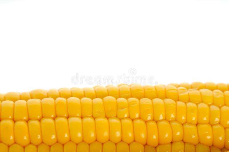 Download Kukurudza zdjęcie stock. Obraz złożonej z kukurudza, rolnictwo - 13342634