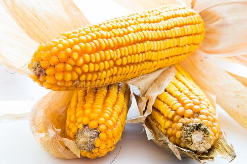 Kukurudza, cob, zboże, groszkuje zdjęcie stock